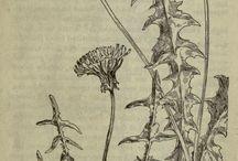 Herbalism & Wild Crafting
