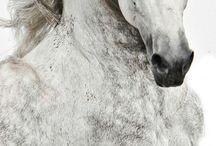 #Horse #Horses #Horses action / #Horse #Horses #Horses action