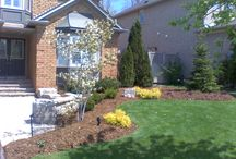 Mulch & Gardens