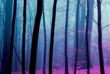 Colourful Trees