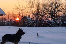 Jerry / German Shepherd dog - Jerry Lee in winter