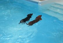 Pets in the Pool
