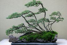 Tiny and adorable bonsai trees :)