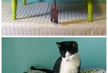 Pelechy pre zvieratká