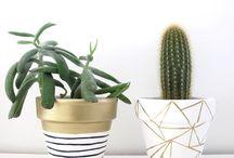 Vases, pots & planters