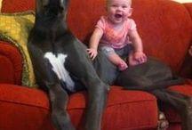 cachorros com bebes