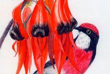 Uccelli Tropicali