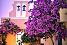 Corfu --- Home