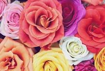 roses / by Pau Chavez