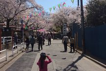 Cherry blossoms / 桜 Saitama 埼玉 / Places to see beautiful cherry blossoms and / or enjoy hanami in Saitama prefecture. 埼玉県、桜