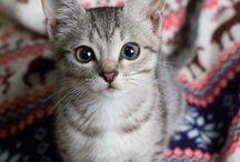 Kittens ♡