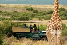 Eastern Cape safaris