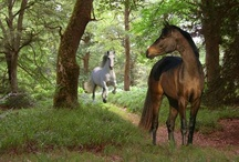 Horses!  / by Amber Stone-Aguirre