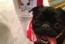 #OVMA  Conference 2015 / Woofing about my weigh loss journey at the OVMA conference in Toronto with my #finefoodfriends Royal Canin Canada.