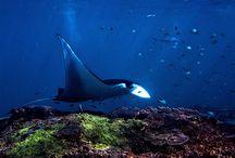 Aquatique / Photos du monde sous-marin et sub-aquatique