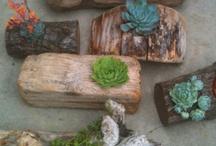 Cactus and succulent pots, hanging pots