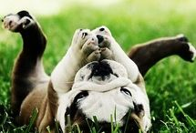 Animals I wish to Have!