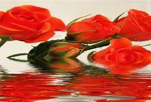 Sultangazi Çi.çek / Sultangazi çiçek siparişlerinizi sitemizden kolayca verebilirsiniz.Telefon veya sitemiz üzerinden sipariş alıyoruz.