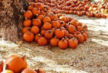My favourite season - autumn