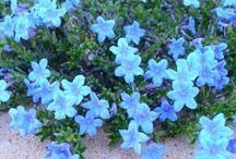Shade floral garden