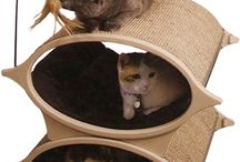 Animals: Cat care