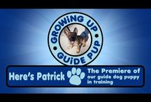 GUGP - Patrick  Vids / Season 3 starring Patrick the guide pup.