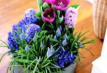 Growing flowers and shrubs / When & how to grow pretty and interesting flowers and shrubs.