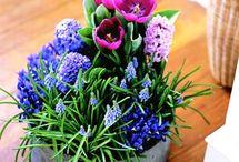 Flower bulbs inspiration
