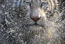 animal instinct / by Brian Stewart