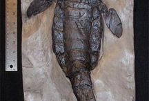 paleontological wonders / by Anthony Hicks