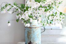Flowers / by Maija Nyman