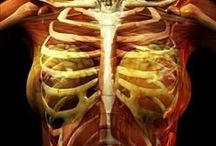 Fibromyalgia / The syndrome, FIbromyalgia, that leaves a person feeling like they are wrapped in a barbed-wire cage. Pain, Pain and more Pain.   Read my book on Women's Health, Archives of the Vagina: A Journey through Time ~ http://drmargaretaranda.tateauthor.com/other-works/