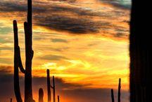 arizona / by Jennifer Young