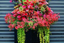Flowers f lg pots