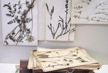 Herboristerie/ herbier