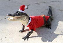 Alligators / by Tammy Petrarco