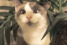 Funny&Random Animal Pics