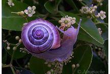 der farbe lila