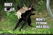 Hahaha! / by Michelle Tucker