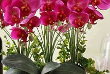 bloemen orchidee
