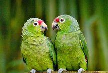 Red-lored parrots in Ecuador #HeathrowGatwickCars.com