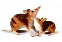 Australian Animal Toys / Pictures of the Science and Nature animal figurines we have for sale