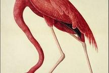 Artist-Audubon / examples