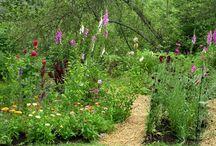 Garden ideas / by Carlene Mutter