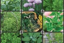 Gardening & flowers / Gardening- herbs, vegetables, flowers & ideas