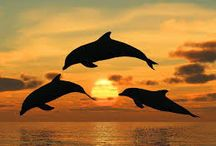 dolphins / dolphins