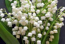 květiny   -   flowers