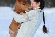 Sevimlilikleriyle Kalbinizde Taht Kuracak Minik Atlar