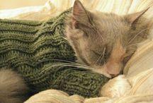 Kissa pukeutuu...