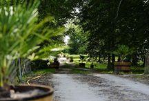 Le Domaine - Parc / « Ecrin de verdure de plus de 6 hectares entourant le château... » Un magnifique jardin paysagé entoure le château et se prolonge par un parc boisé de 6 hectares plantés de chênes centenaires et de nombreuses autres essences d'arbres, où vous pourrez flâner en toute tranquillité.  Plusieurs rivières (dénommées « Jalles » localement) le traversent, jalonnées de charmants petits ponts de pierre.  Pour de plus amples promenades, vous avez directement accès depuis la propriété à la forêt des Landes.